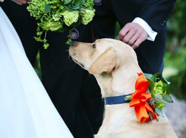 Woman/Man's Best Friend always has your back, even on your big day…